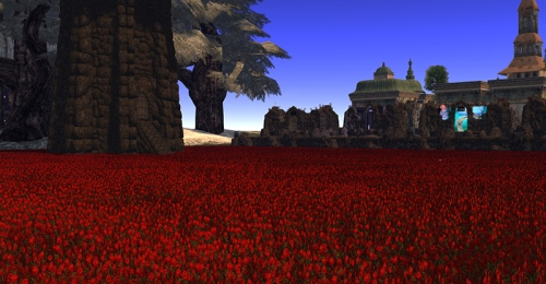 Crimson Fields, photograph by Wildstar Beaumont