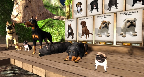 Pets at Zooby's, photographed by Wildstar Beaumont